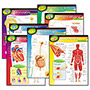 "Trend Enterprises Human Body Learning Chart Combo Pack, 17"" x 22"""