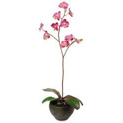 "Baumgarten's Artificial Fuchsia Orchids in a Green/Brown Ceramic Pot, 25"" Overall Height"