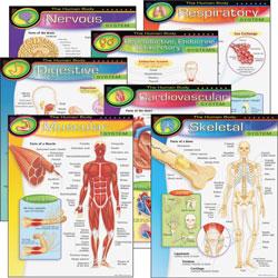 "Trend Enterprises The Human Body Charts, 17"" x 22"", Multicolor"