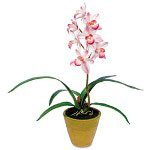 "Baumgarten's Artificial Pink Cymbidiums in a Terra Cotta Pot, 21"" Overall Height"