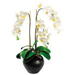 "Baumgarten's Artificial White Orchids in a Dark Brown Ceramic Pot, 27"" Overall Height"