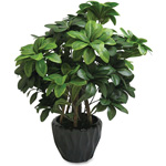 "First-Base Pittosporum Tobira Plant, Silk Leaves, 5"" Pot, Green"
