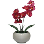 "First-Base Moth Orchid Fuchsia Plant, Silk Leaves, 5"" Pot, Purple"